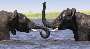 Elephants and What You Need to Know About Reputation Management