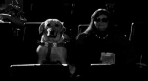 Crossroads Film Festival TV Commercial Dog